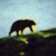 Aimez les ours, flinguez les loups !