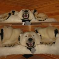 L'ours polaire en Annexe II